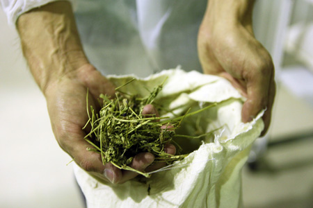 какие травы выводят паразитов из организма