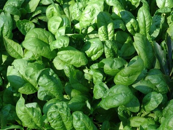 В шпинате содержится много полезных веществ